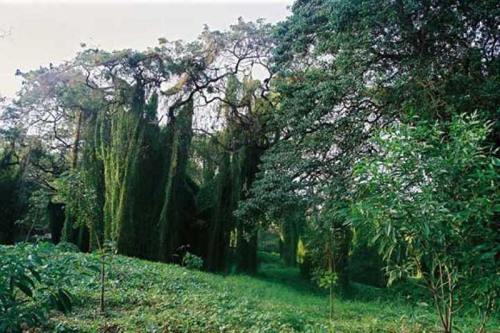 CIENAGA bosque-de-cuba