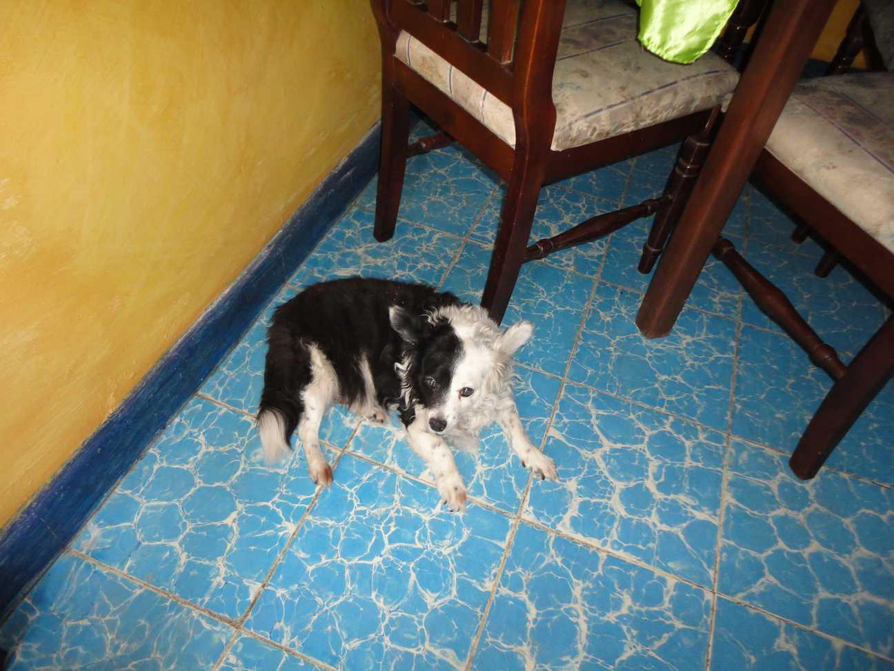 perros mupy3