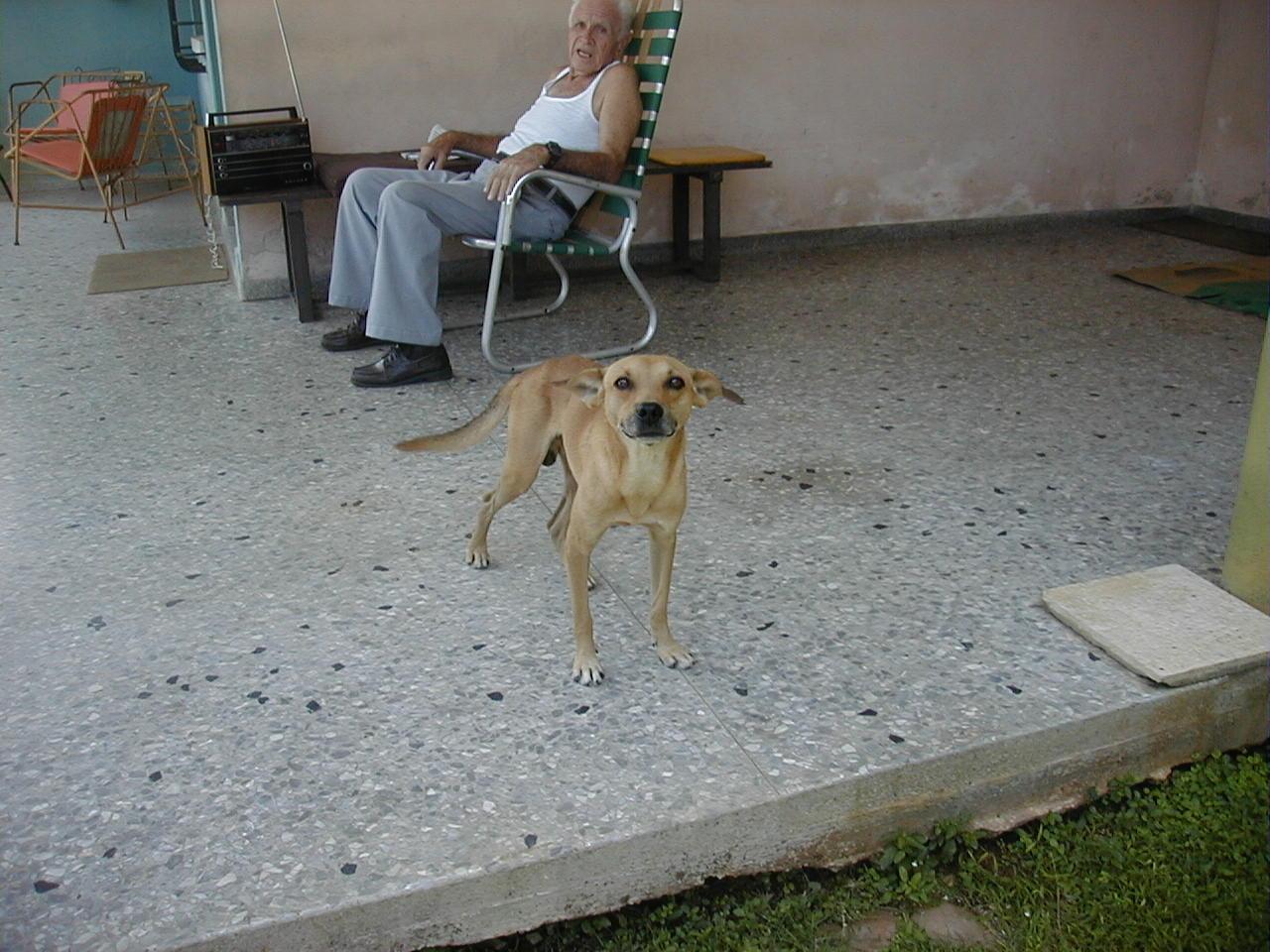 perros rocky2