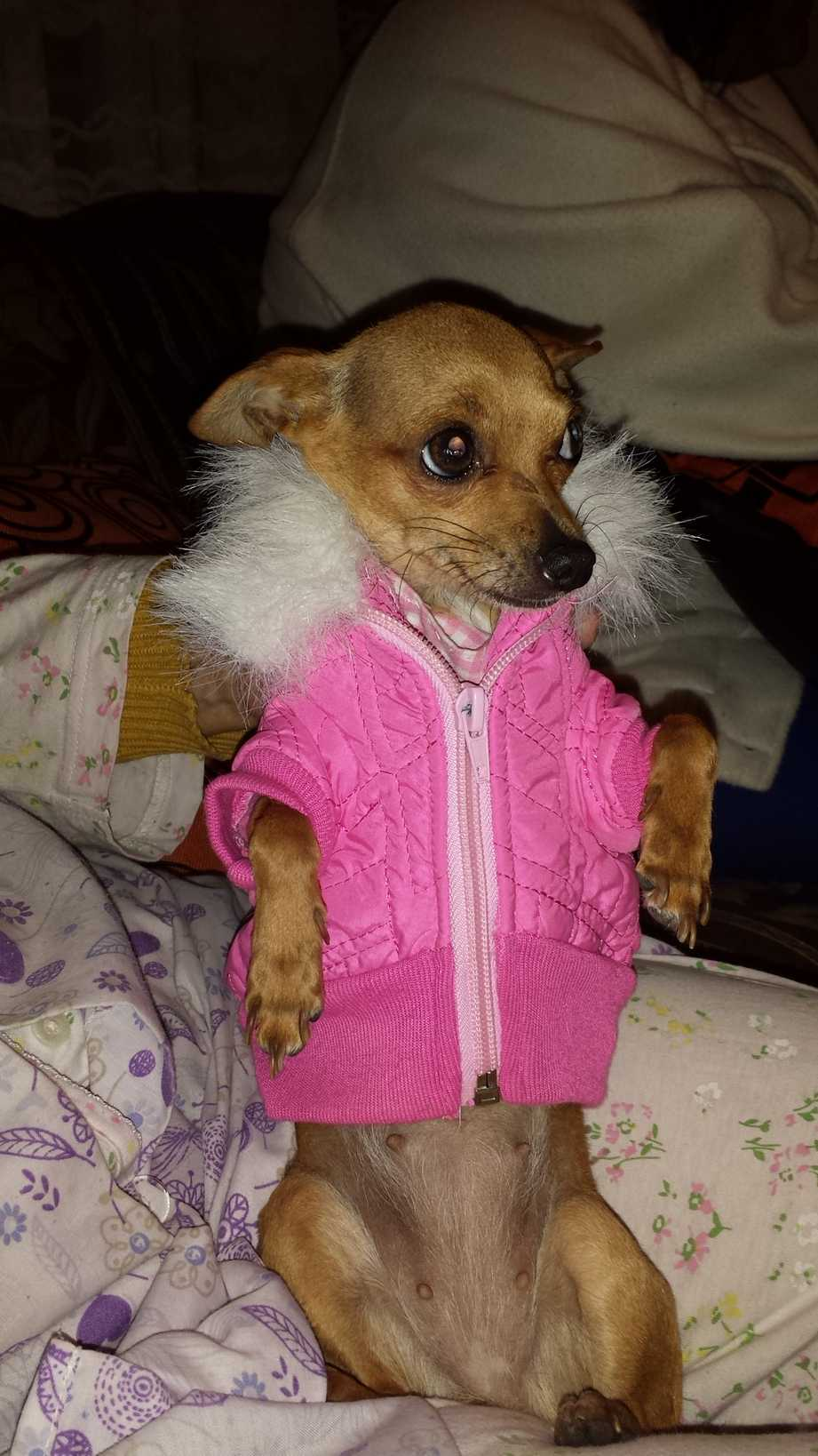 perros tekila con frio