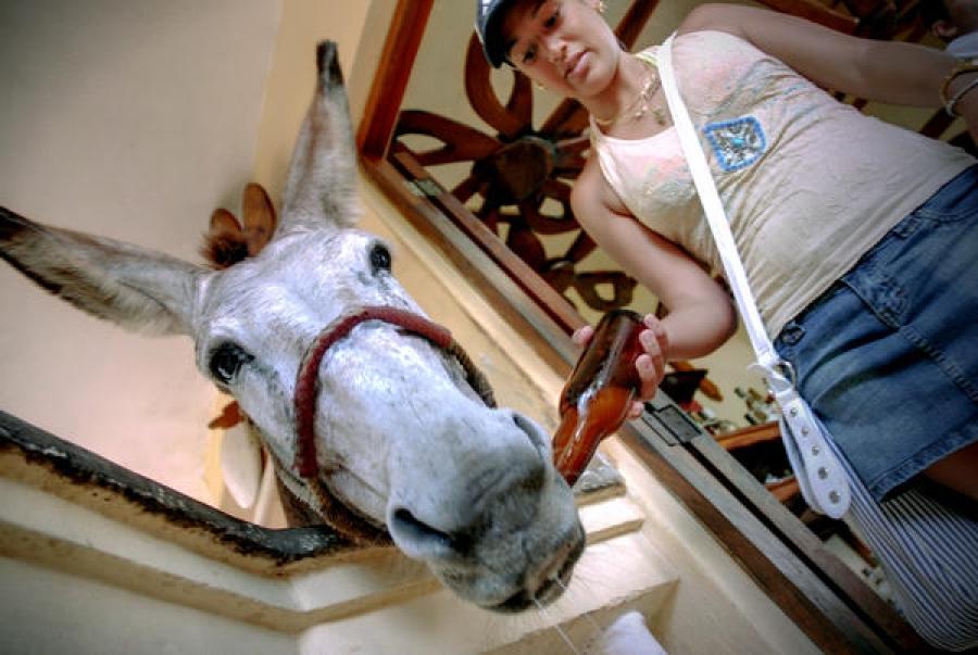 personajes pancho burro mayabe