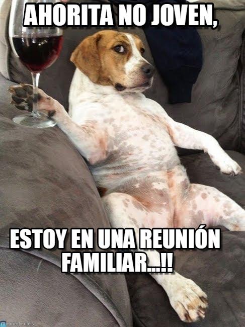 perro_tomando_vino_meme-www.memegen.es (1)